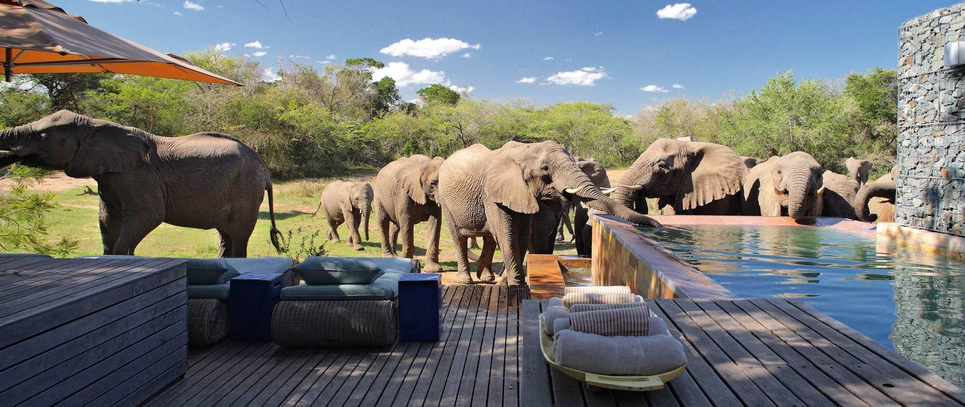 10 Top-Rated Luxury Safari Lodges in South Africa | PlanetWare
